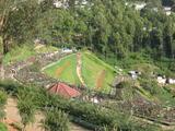ooty rose garden tamil nadu india